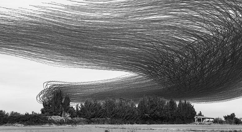 تصاویر خارق العاده ای از جهت پرواز دسته جمعی پرندگان به سبک عکاسی Ornitographies