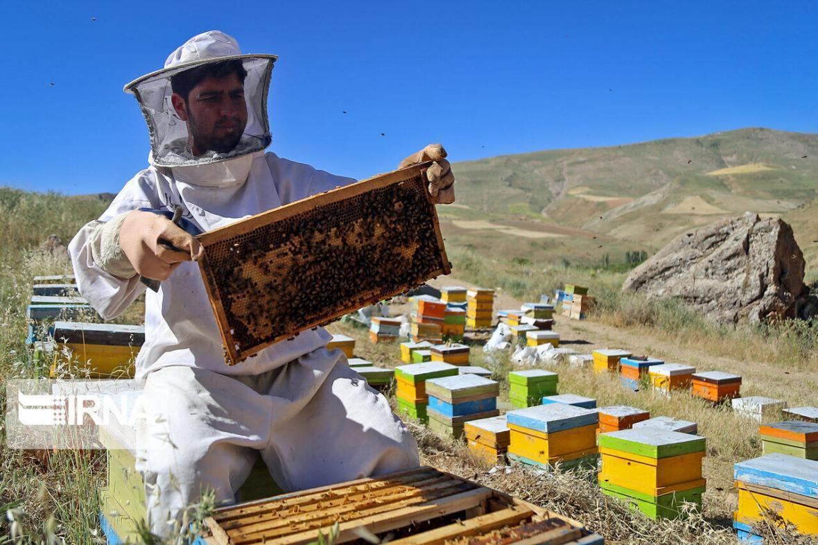 خبرنگاران 28 تن عسل در باخرز تولید شد